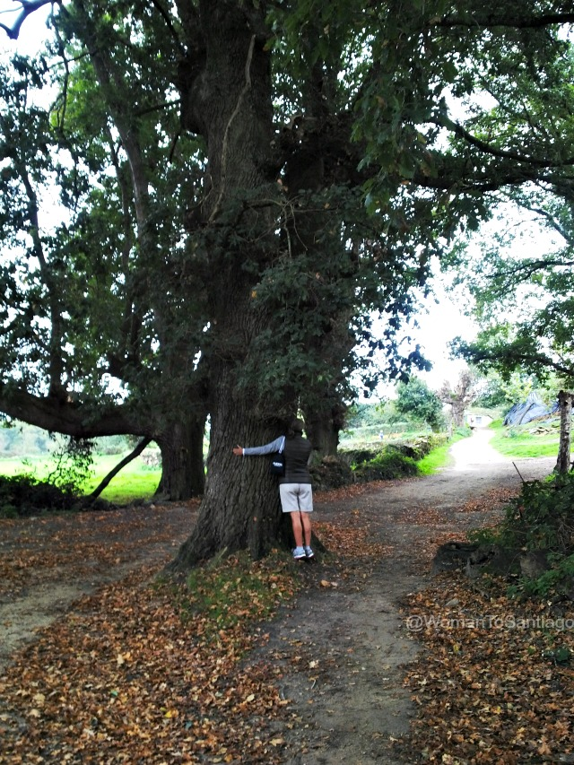 foto de un carballo