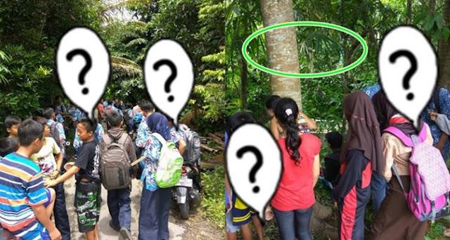 Video - Fenomena Pohon Menangis ini Bikin Warga Magelang Jadi Heboh !!