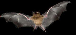 Soñar con murciélagos ¿Que Significa?