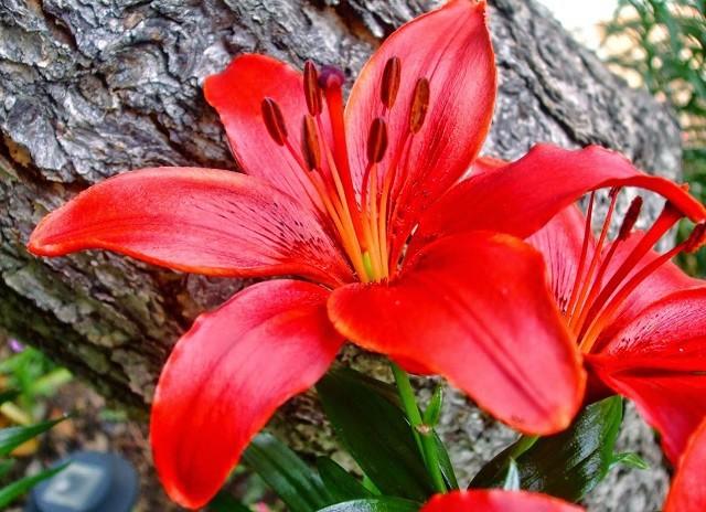 hinh anh hoa ly dep nhat 1