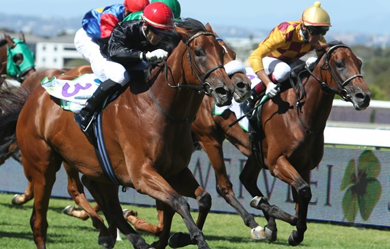 Nightingale - Horse - Durban July - Candice Bass-Robinson trained - Durban July - Horse Racing