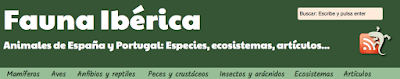Fauna ibérica. Camaleón