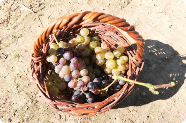 fattorie didattiche a Pesaro