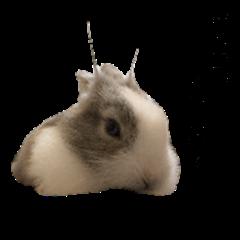Rabbit-DuKa(TwoDu)