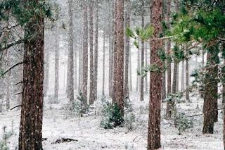 Promueve BC medidas para mitigar contaminación en invierno
