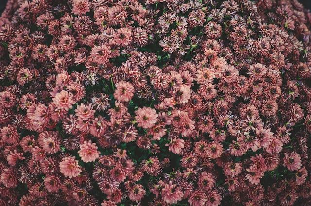 platki-kwiaty-pielegnacja-skory