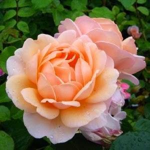 Bunga Paling Mahal di Dunia - Hidup Sehat ab4ceb08e2
