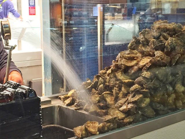 Sydney Fish Market - Oysters