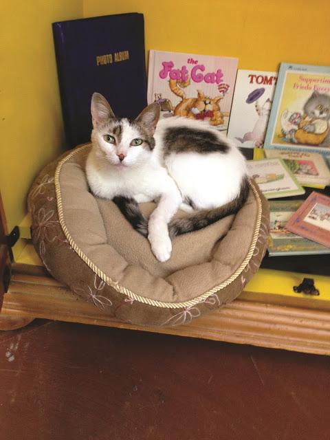 Bookstore cats|Glitterati Incorporated