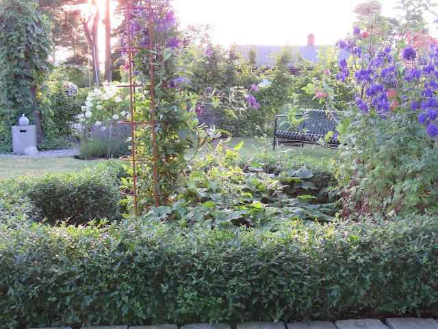 Tips til hagedesign. Litt av hagen i kveldssol. Furulunden.