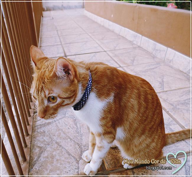 curiosidade do gato