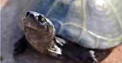Οδηγός τουριστικού λεωφορείου καταδικάστηκε σε βαρύ πρόστιμο επειδή πάτησε μια χελώνα στα νησιά Γκαλαπάγκος, ανακοίνωσαν χθες Παρασκευή οι ...