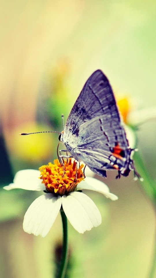Butterfly Collecting Nectar   Galaxy Note HD Wallpaper