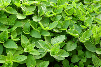 Marjoram is anti-inflammatory and purported to increase milk supply