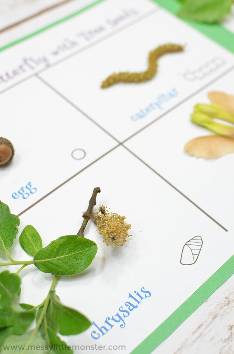 Stages of a Butterfly Life Cycle Seed Activity (Free Printable)