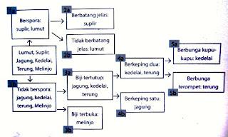 Klasifikasi Dikotom dan Kunci Determinasi