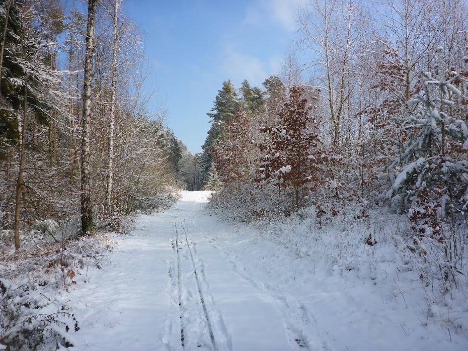 Дорога, лесная, снег