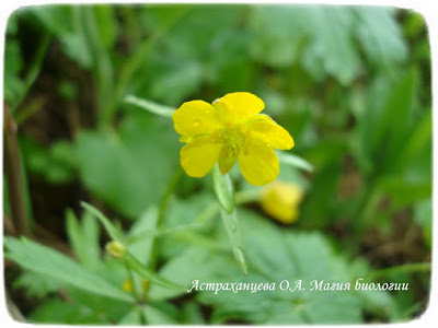 дождь, желтый цветок, капли на траве