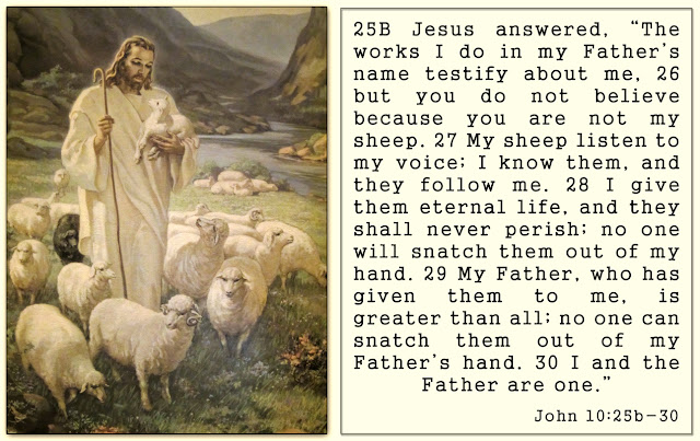Painting of Jesus - The Good Shepherd - with John 10 : 25b - 30