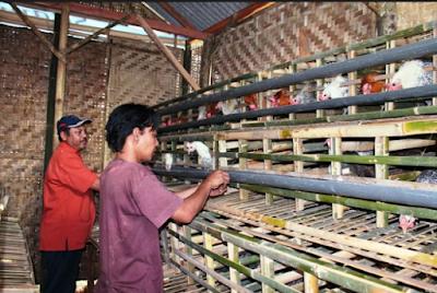 Kandang Bambu Dalam Peternakan
