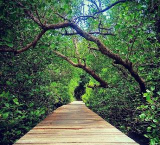 http://www.teluklove.com/2017/03/daya-tarik-objek-wisata-hutan-mangrove.html