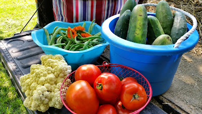 Frugal gardening tips for the backyard gardener.
