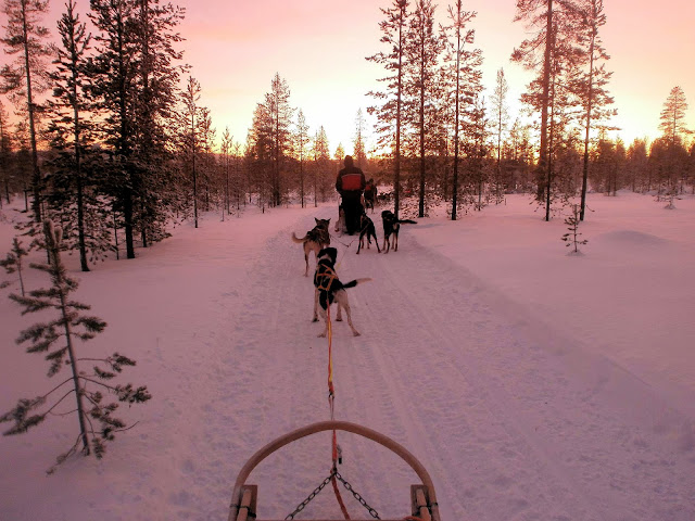 Husky sledding is just one of the many snowy adventures that await in Santa's Lapland.