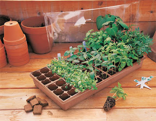 Seed starters help us get the plants for the garden.