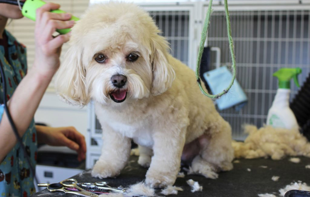 Things Your Dog Groomer Wishes You Knew Australian Dog Lover