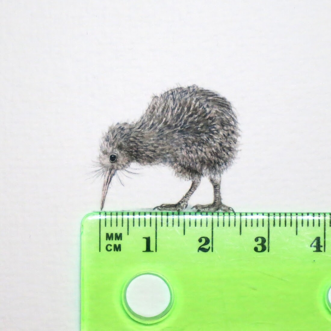 11-Kiwi-Frank Holzenburg Miniature Drawings and Paintings of Animals-www-designstack-co