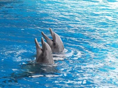 Delfines filmek bemutatása