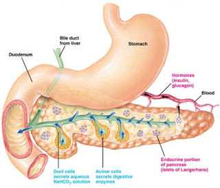 Beberapa Penyebab umum bau nafas wajib anda tahu