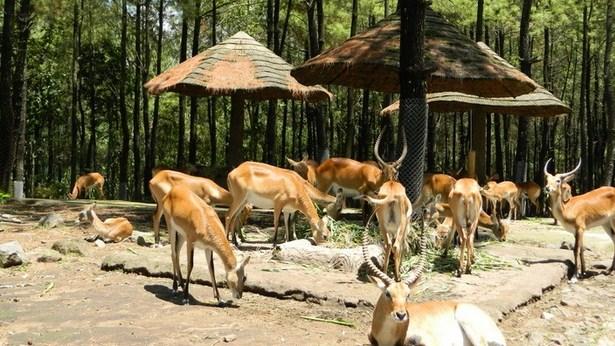 Pesona Keindahan Wisata Taman Safari Prigen Pasuruan Ihategreenjello