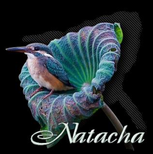 http://colybrix-psp.eklablog.com/natacha-a162284158