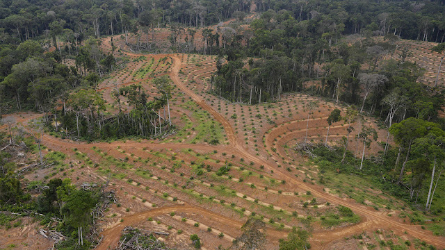 Ahli Hukum Agraria: HGU Prabowo 340.000 Ha Tak Langgar Aturan