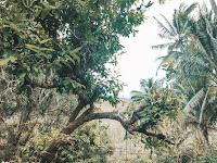 Sungai maroon Pacitan amazonnya Indonesia