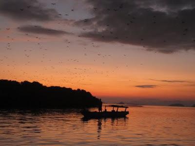 Kelelawar terbang saat senja di Flores, NTT