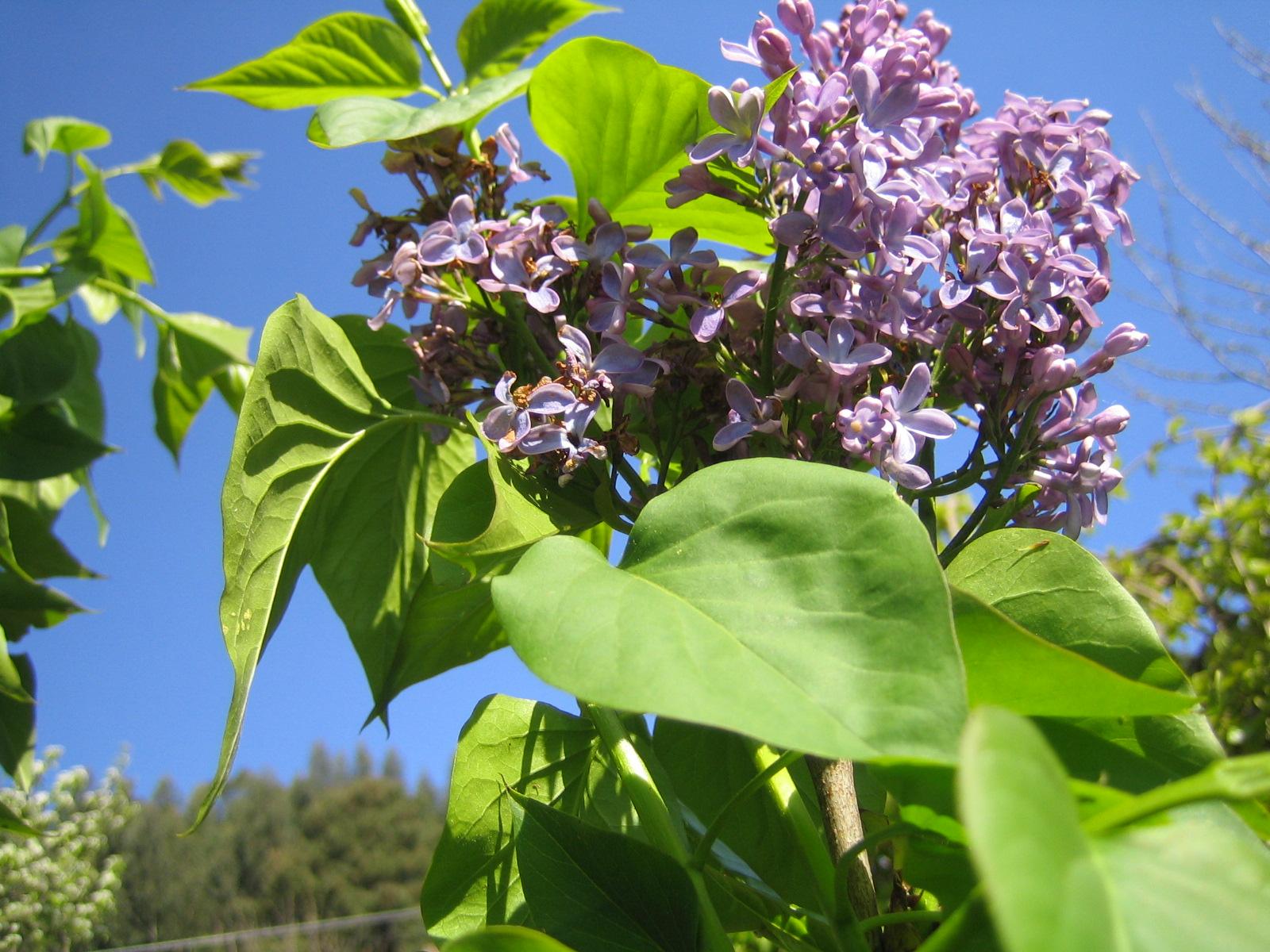 érase una vez quizá: La flor del Lilo