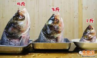 廣東話俗語 - 阿均賣大魚頭 好噏唔噏