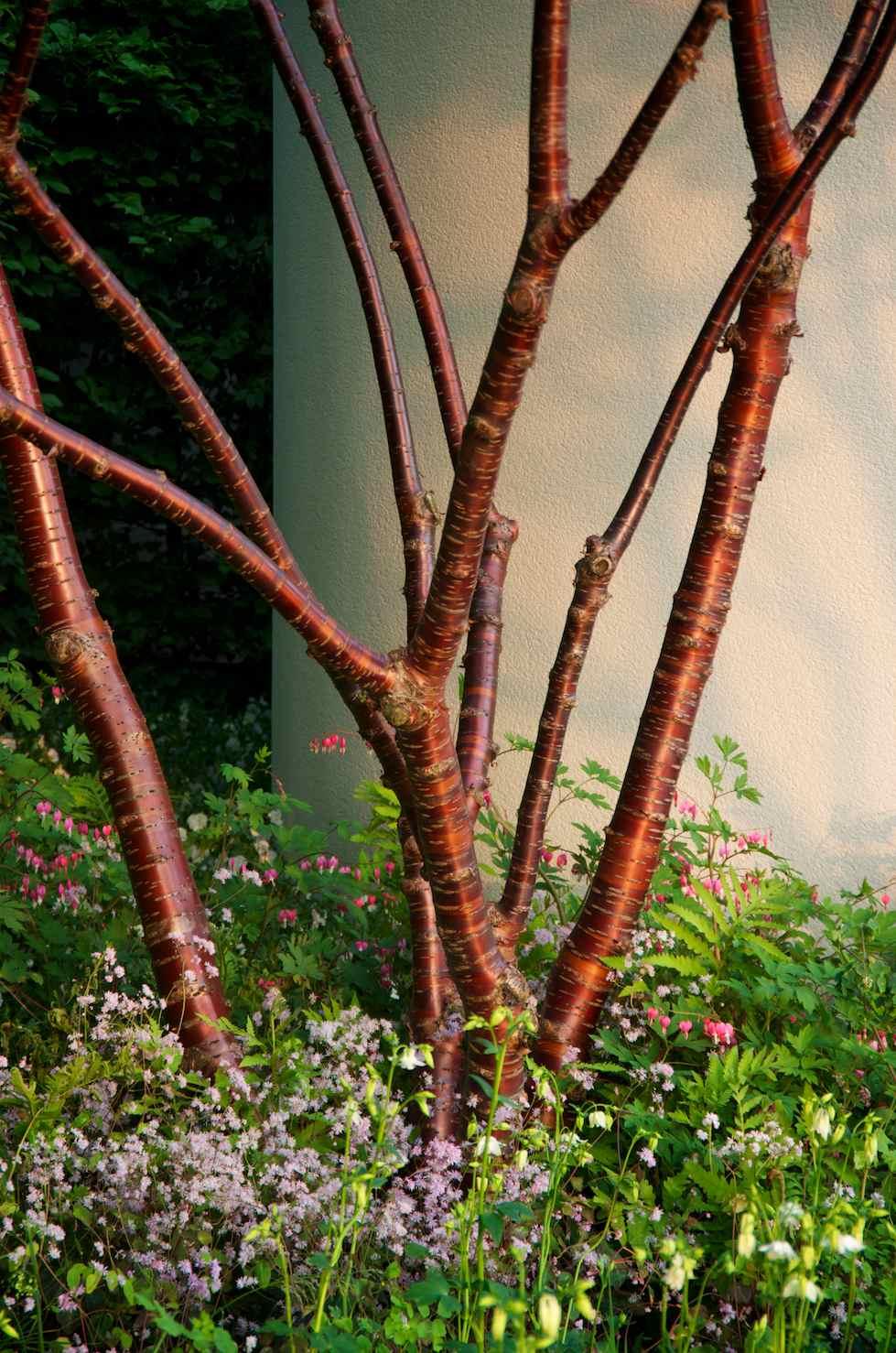 Photographer S Garden Chelsea 2012 Lilium Martagon Rbc