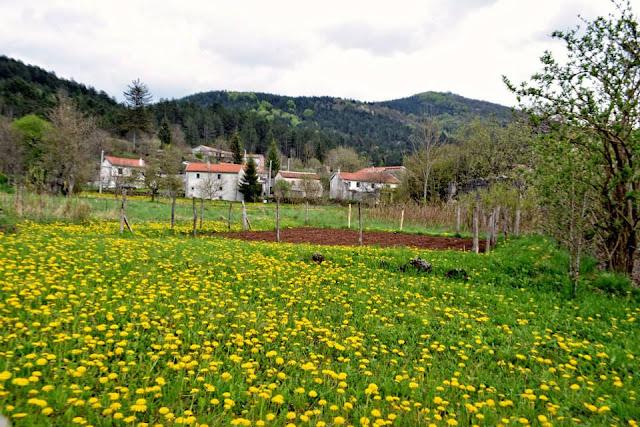 Selo Dane Istra