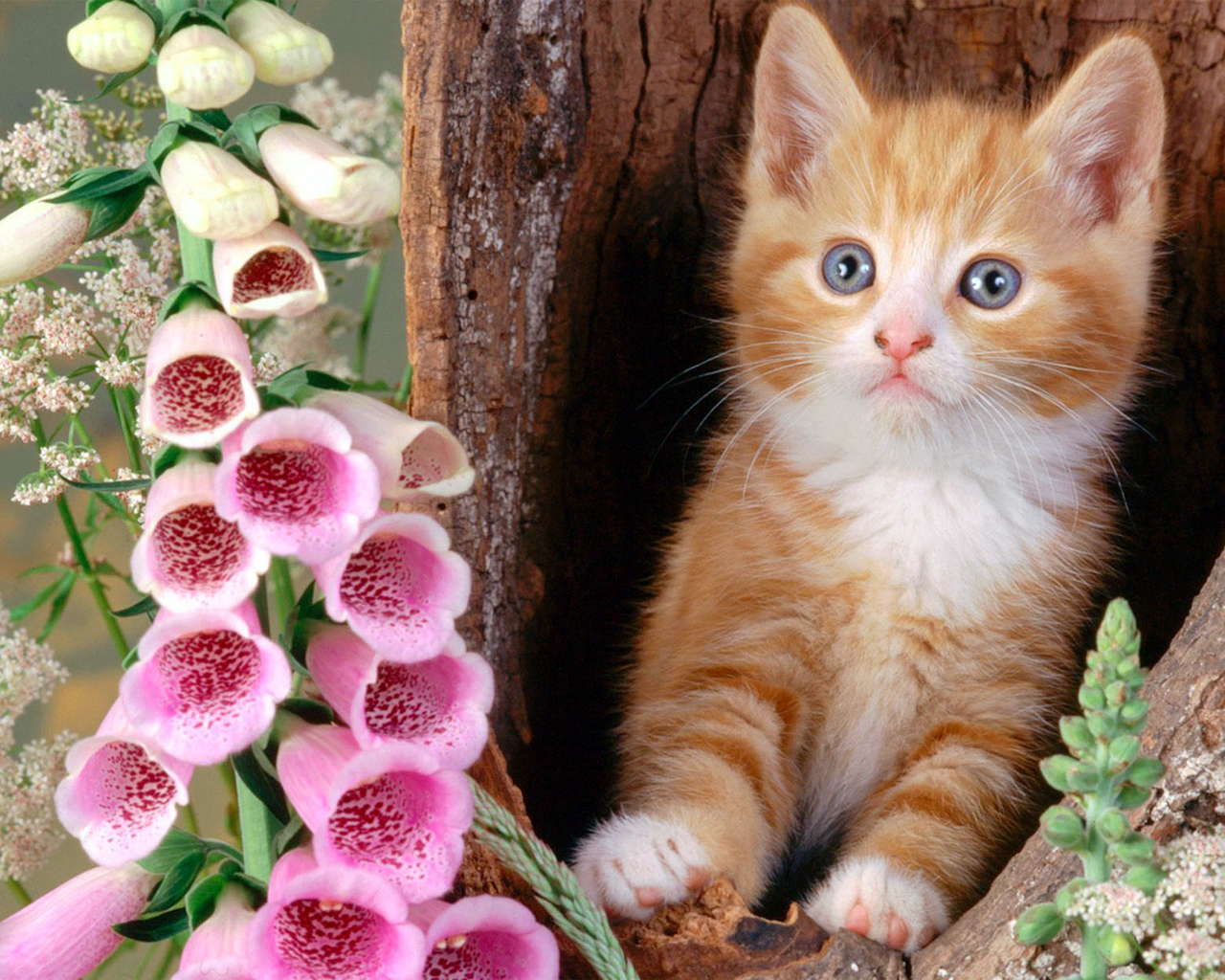 All wallpapers beautiful cats hd wallpapers - Cute kittens hd wallpaper free download ...