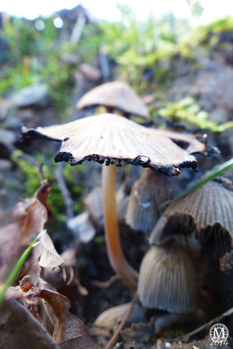 Fungi Friday! [Photography]