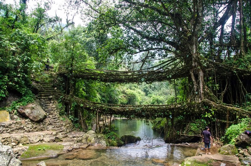 At Sohra (Cherrapunjee)  — Meghalaya's double-decker and single-decker root bridges are found in Cherrapunjee (Sohra) & Mawlynnong. Located around 56 kms from Shillong, the capital of Meghalaya, Cherrapunjee is a must visit destination known for its numerous waterfalls and a trek to the single and double decker root bridges.
