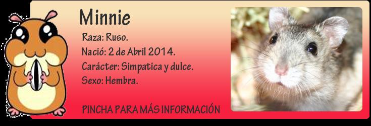 http://almaexoticos.blogspot.com.es/2014/05/minnie-hamstercita-en-adopcion.html