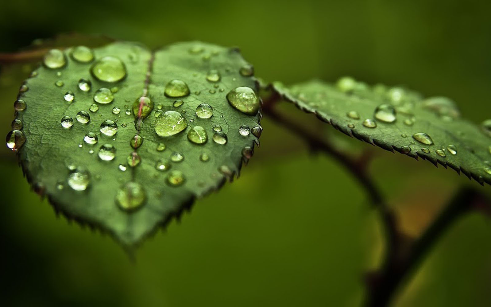 Wallpapers Water Drops On Leaf Wallpapers