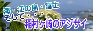 稲村ヶ崎のアジサイ