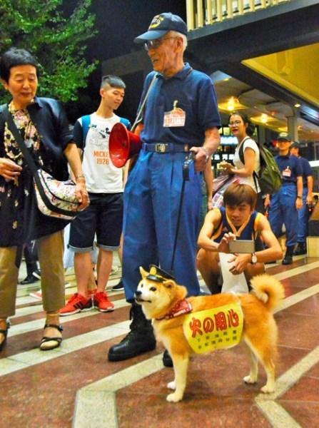 Chú chó cứu hỏa khiến người dân Nhật phát sốt