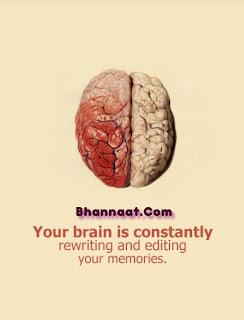 Brain capacity