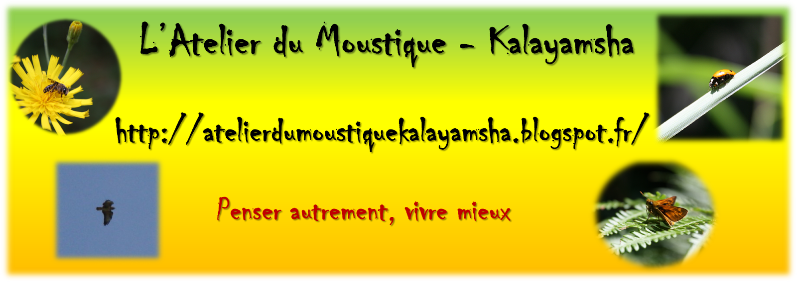 l 39 atelier du moustique kalayamsha conserver ses. Black Bedroom Furniture Sets. Home Design Ideas